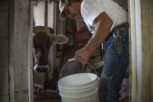 John W. Gilbert does morning chores on his family's farm, Gibralter Farms, on Thursday morning, July 20, 2017, in rural Hardin County. The Gilbert's raise dairy cattle, pigs and crops.